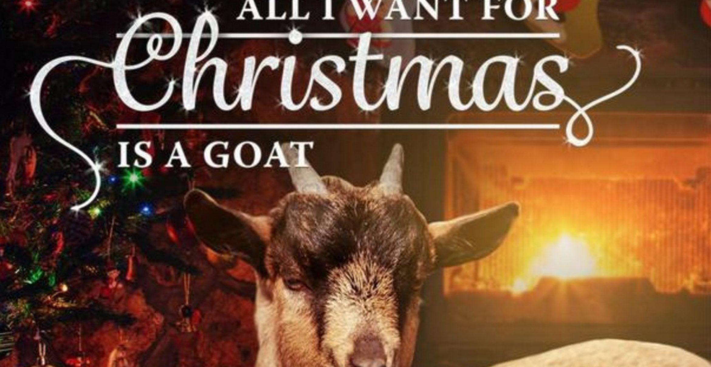 Einzigartiger Spendenaufruf: Mit weihnachtlichem Ziegengesang gegen Armut