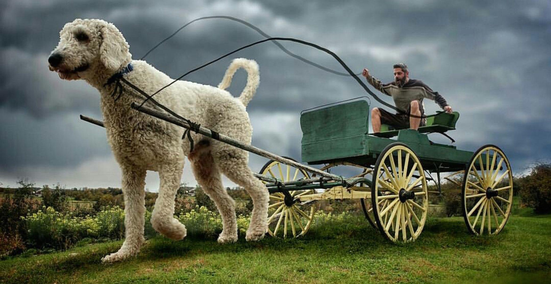 Ganz große Hundeliebe: Fotograf setzte seinen Hund gigantisch in Szene