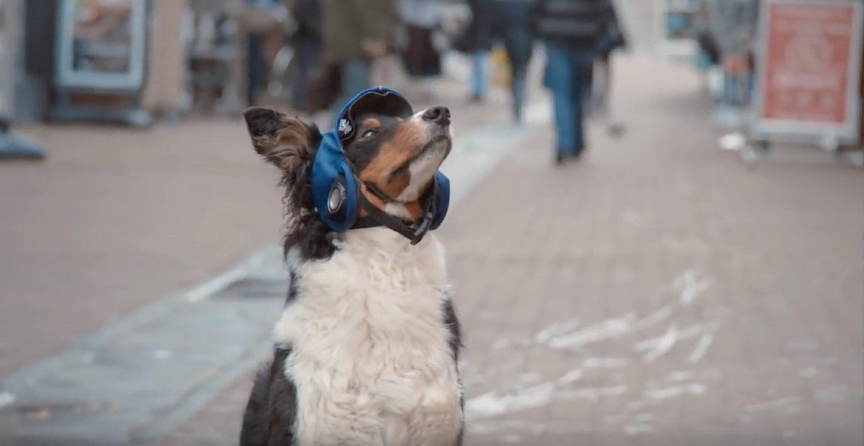 """Neue VW-Kampagne: Der """"Connected Dog"""" ist das Haustier der Zukunft"""