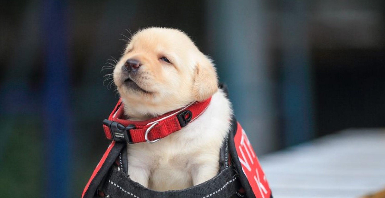 Police Puppies: Diese Welpen sind die wohl süßesten Polizei-Rekruten der Welt