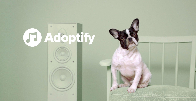 Adoptify matcht Herrchen und Hund mit gleichem Musikgeschmack