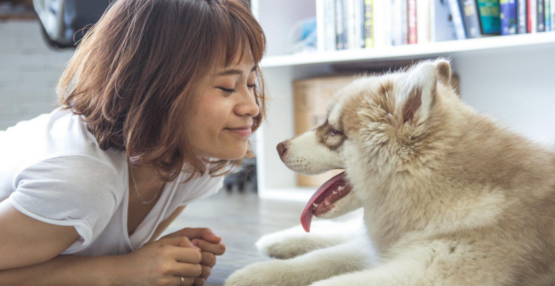 Bürohundetag: So überzeugt ihr eure Kollegen von einem Office Dog