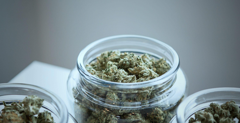 Vier Cannabis-Startups, die ganz und gar nicht dem Kiffer-Klischee entsprechen