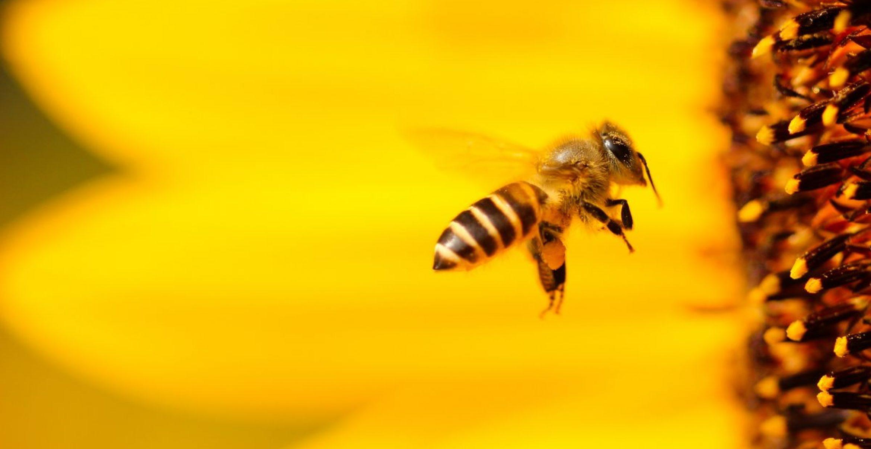 In Utrecht können jetzt auch Bienen an Bushaltestellen Stopp machen