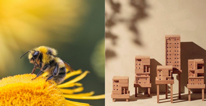 Ein Haus für Bienen designen und bauen – diese Website macht's möglich