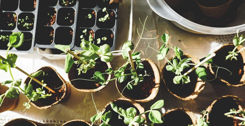 Urban Gardening: So macht ihr aus eurem Balkon eine grüne Wohlfühloase