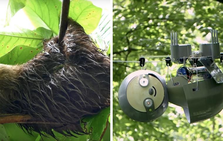 SlothBot: Dieser Faultier-Roboter hilft dabei, gefährdete Spezies zu schützen