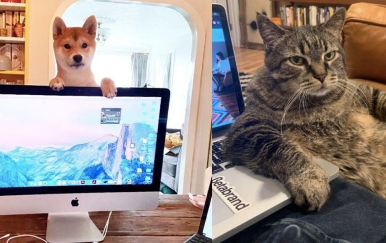 Keine hilfreichen Co-Worker: Wie Homeoffice mit Tieren aussieht