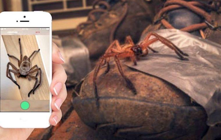 Sicherheitshalber: Australier haben ein Shazam für Spinnen und Schlangen entwickelt