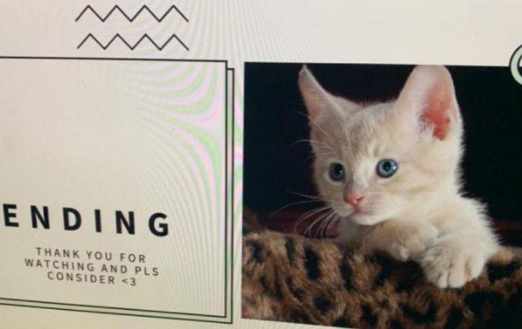 Tochter wünscht sich eine Katze und legt Eltern eine perfekte Power-Point-Präsentation vor