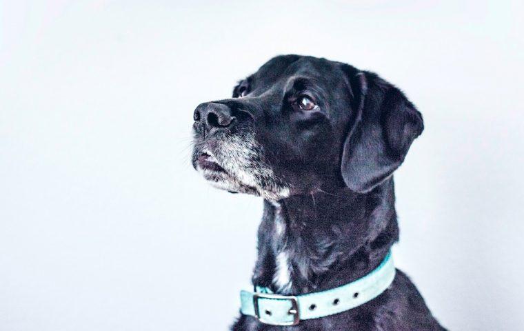 Trefferquote von fast 100 Prozent – am Flughafen in Helsinki erschnüffeln Hunde Corona-Infizierte