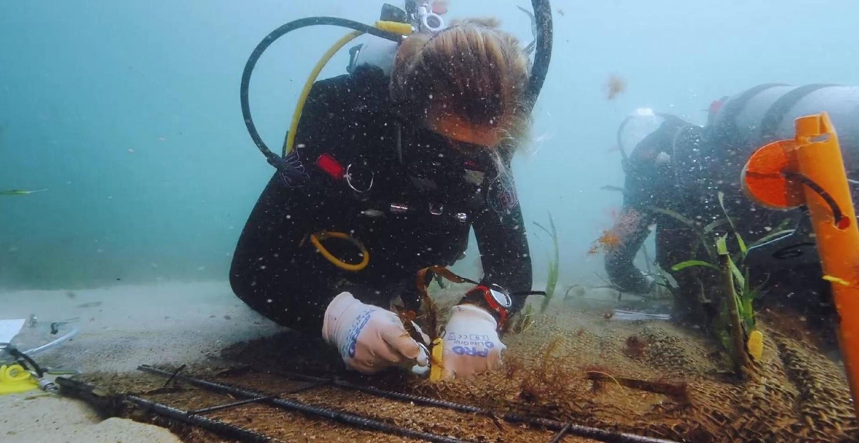Die Suchmaschine Ekoru will die Ozeane schützen – der Gründer verrät, wie das geht