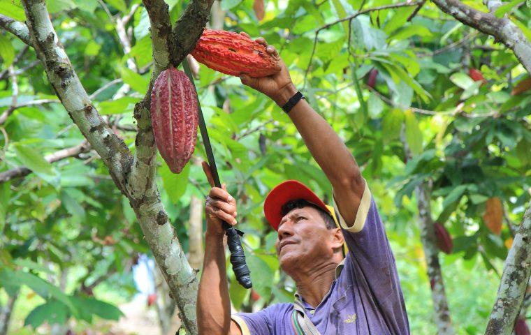 """Mission """"Bessere Welt"""": So will die Rainforest Alliance unseren Konsum nachhaltiger gestalten"""