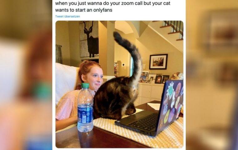Diese Bilder beweisen: Cat Content ist immer noch das Beste am Internet