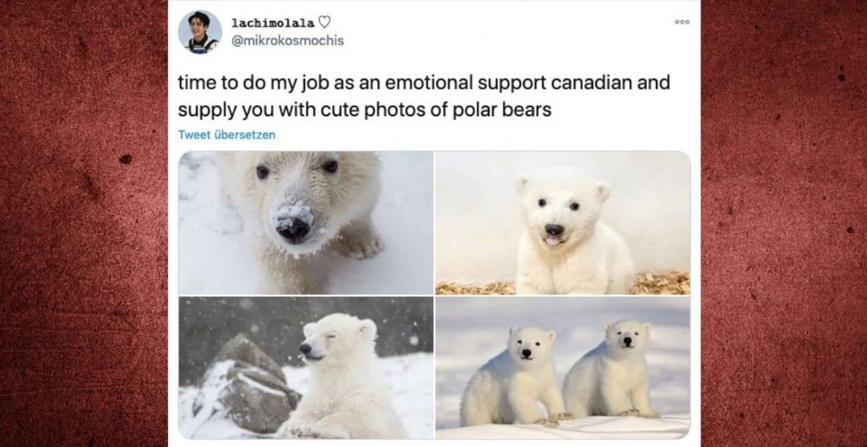 Wegen US-Wahl: Kanadier*innen bieten Nachbarland emotionalen Support an