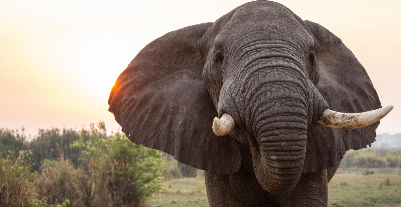 Neues System zählt Elefanten mittels AI aus dem Weltall