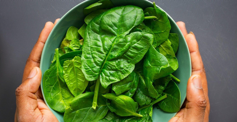 Forschende züchten Spinat, der Mails verschicken kann