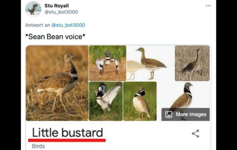 Bei diesen Vogelnamen hat sich wohl jemand einen Spaß erlaubt