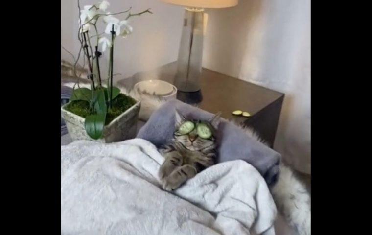 Diese Katze weiß, wie man den Feierabend genießt