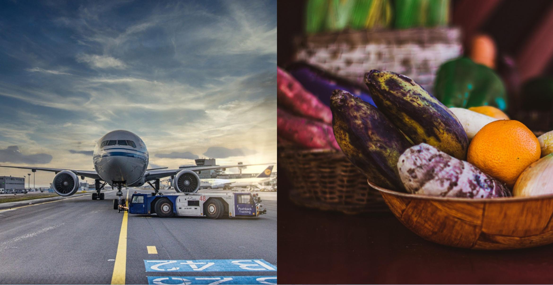 Nachhaltig fliegen? Kraftstoff aus Essensresten könnte das möglich machen