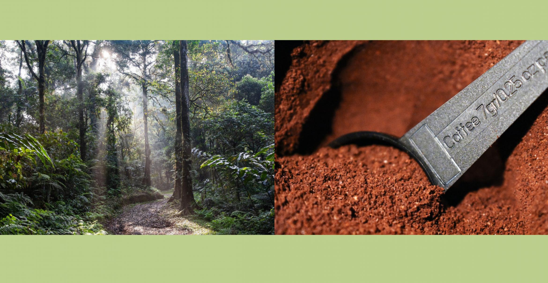 Wie ihr mit eurem Kaffeekonsum die Wälder in Costa Rica schützen könnt