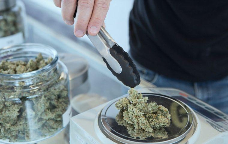 Cannabis als Chance: Wie aus 420 ein Milliardengeschäft wird