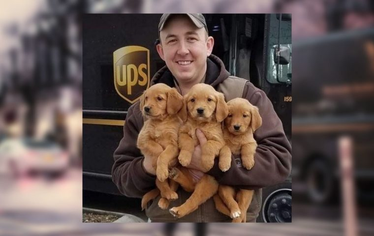UPS-Dogs zeigen: Hunde lieben Paketbot:innen eben doch