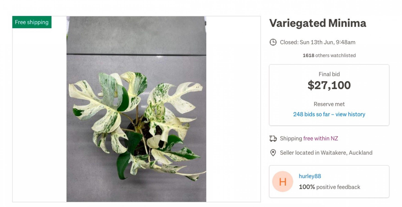 Teure Pflanzen als Interior-Trend? Zimmerpflanze für 16.000 Euro versteigert