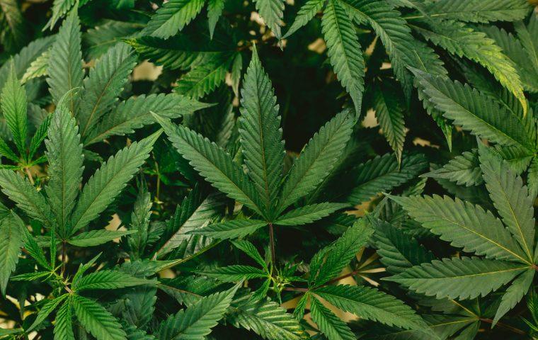 Reddit treibt diese Cannabis-Aktie in die Höhe