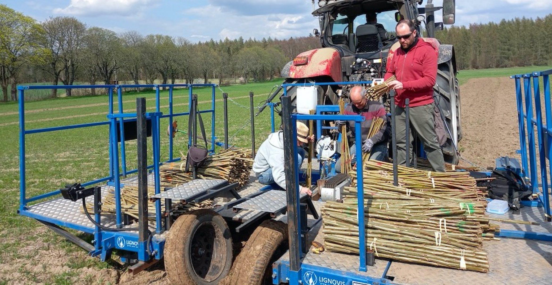 Mit der Baumfeldwirtschaft zur klimagerechten Landnutzung