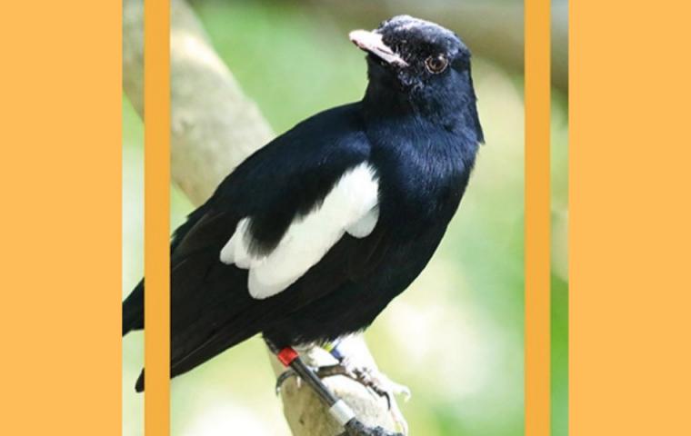 Naturschutz: Diese Vogelart soll mit NFTs gerettet werden