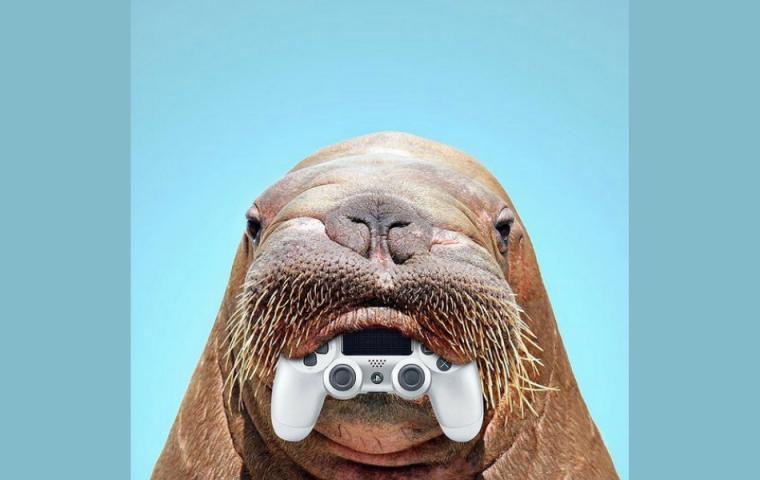Dieser Instagram-Account erstellt Collagen aus Tieren und Alltagsgegenständen